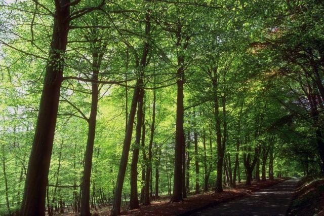 Balades et randonnées dans le département de l'Hérault