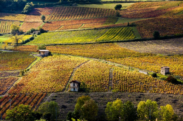 vignes de l'arrière pays Héraultais